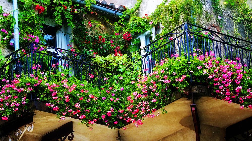 Thiết kế vườn hoa trên ban công đẹp thu hút mọi ánh nhìn