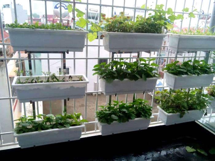 Kinh nghiệm sử dụng chậu ghép trồng rau thông minh